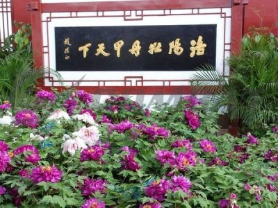 Luoyang Combat invites you to enjoy the Peony Flower Festival together